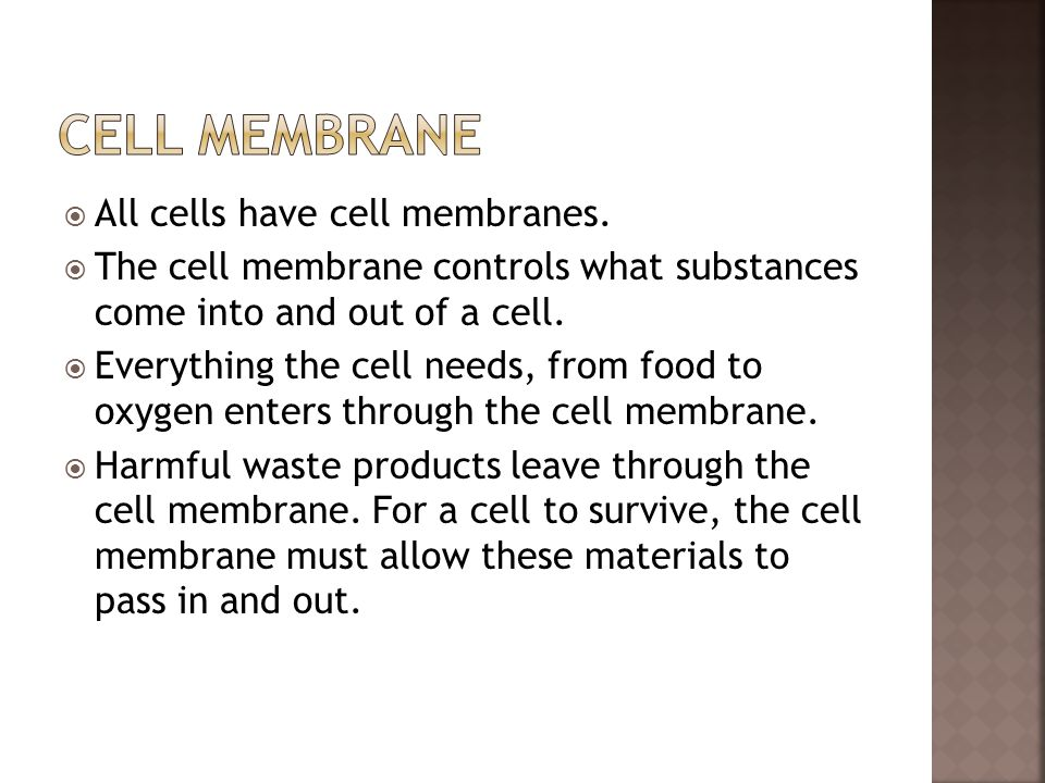 Cell Membrane All cells have cell membranes.