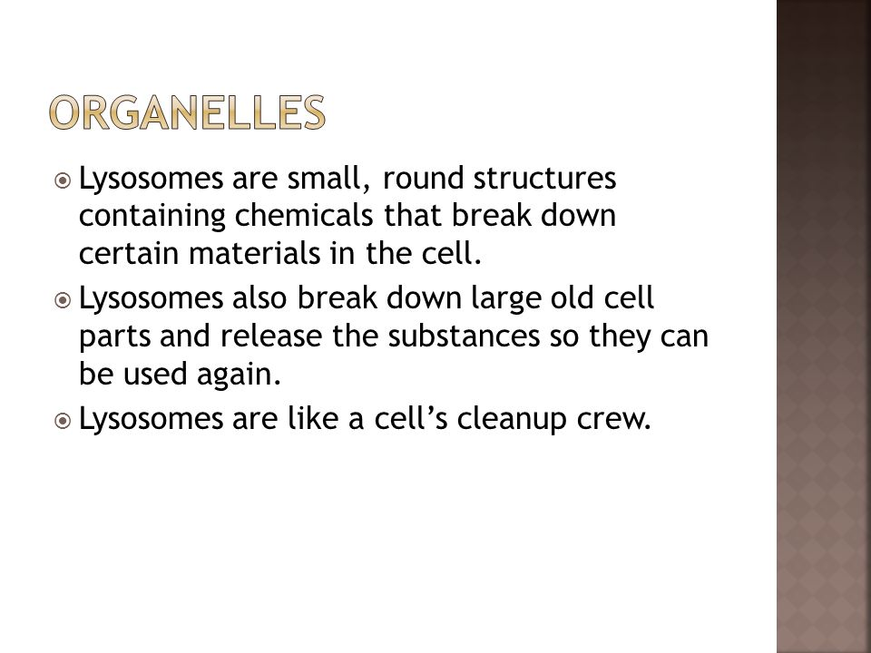 Organelles Lysosomes are small, round structures containing chemicals that break down certain materials in the cell.