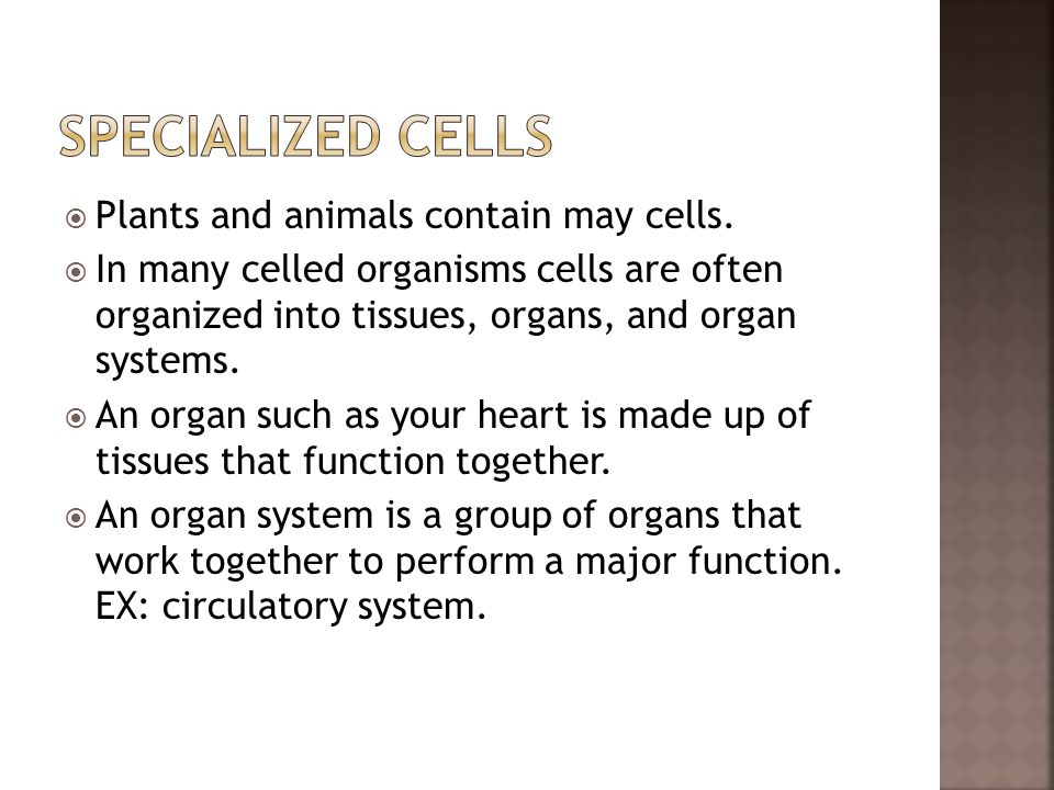 Specialized Cells Plants and animals contain may cells.