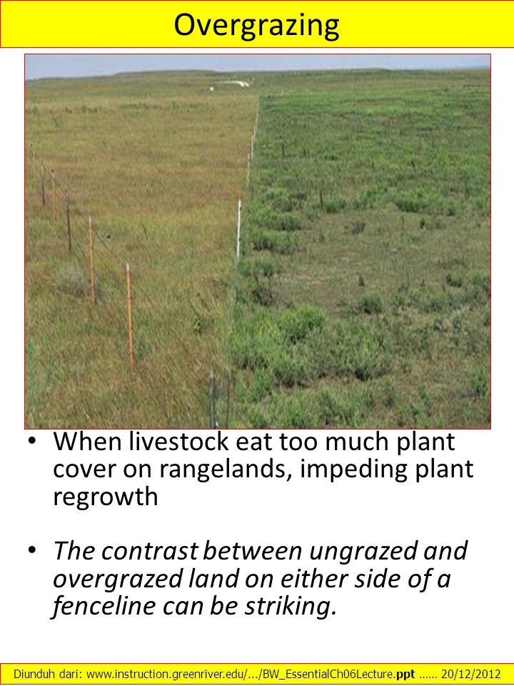 Overgrazing When livestock eat too much plant cover on rangelands, impeding plant regrowth.