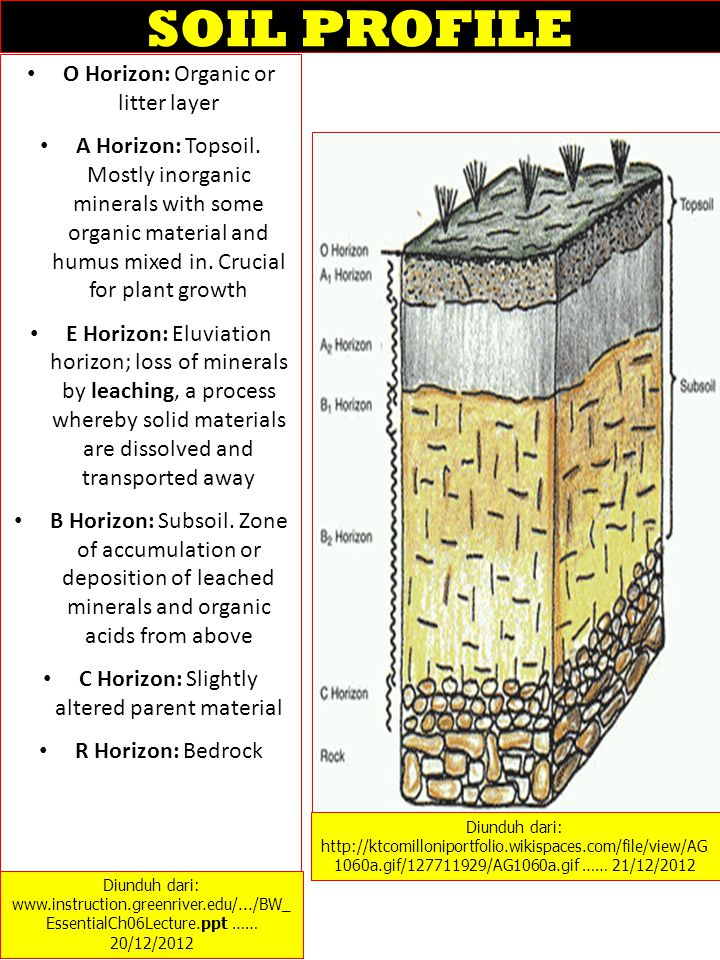 SOIL PROFILE O Horizon: Organic or litter layer