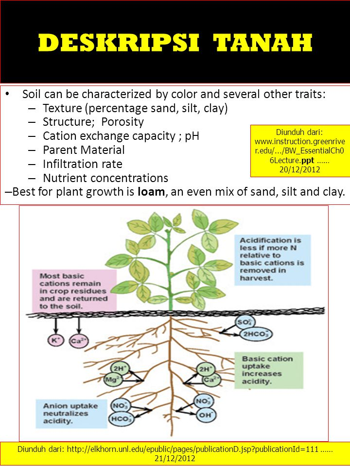 Best for plant growth is loam, an even mix of sand, silt and clay.