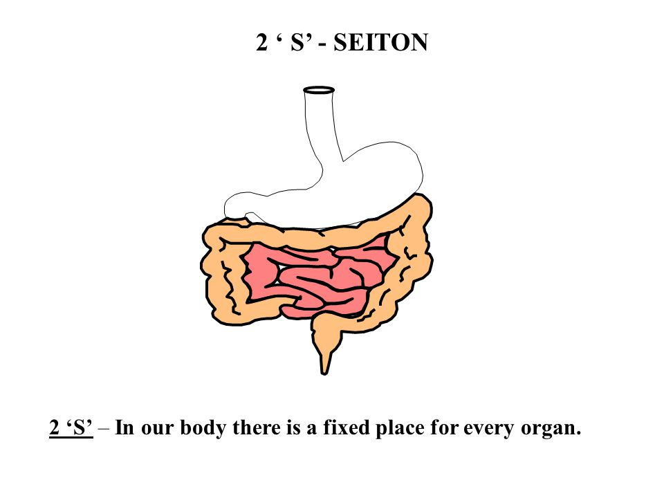 2 'S' – In our body there is a fixed place for every organ.