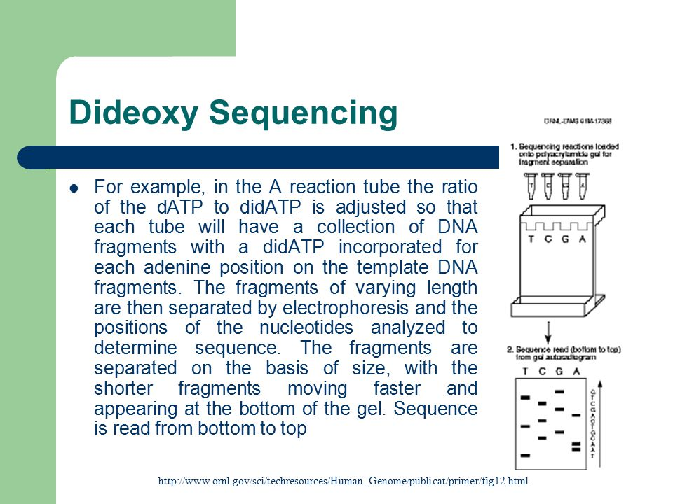Dideoxy Sequencing