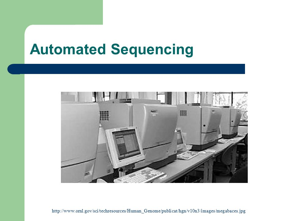 Automated Sequencing http://www.ornl.gov/sci/techresources/Human_Genome/publicat/hgn/v10n3/images/megabaces.jpg.