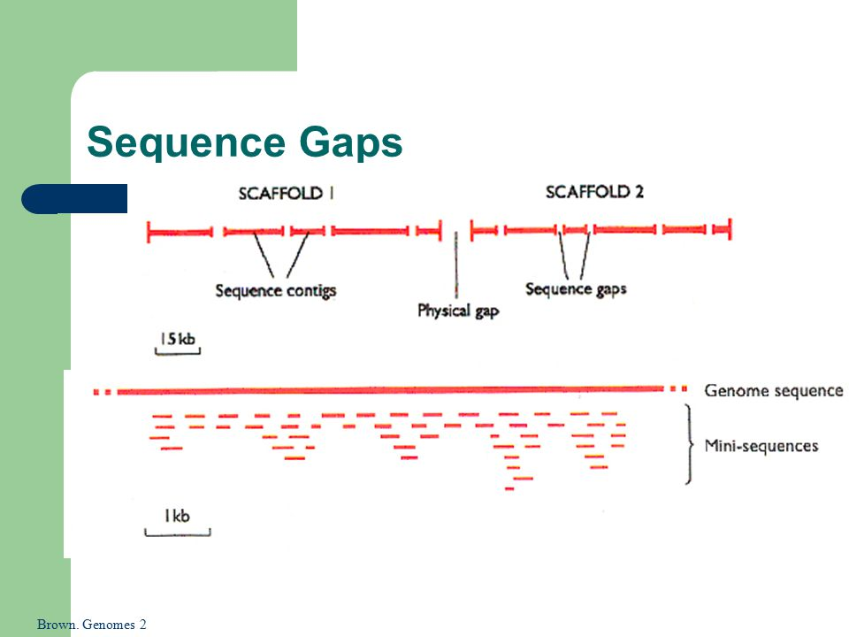 Sequence Gaps Brown. Genomes 2