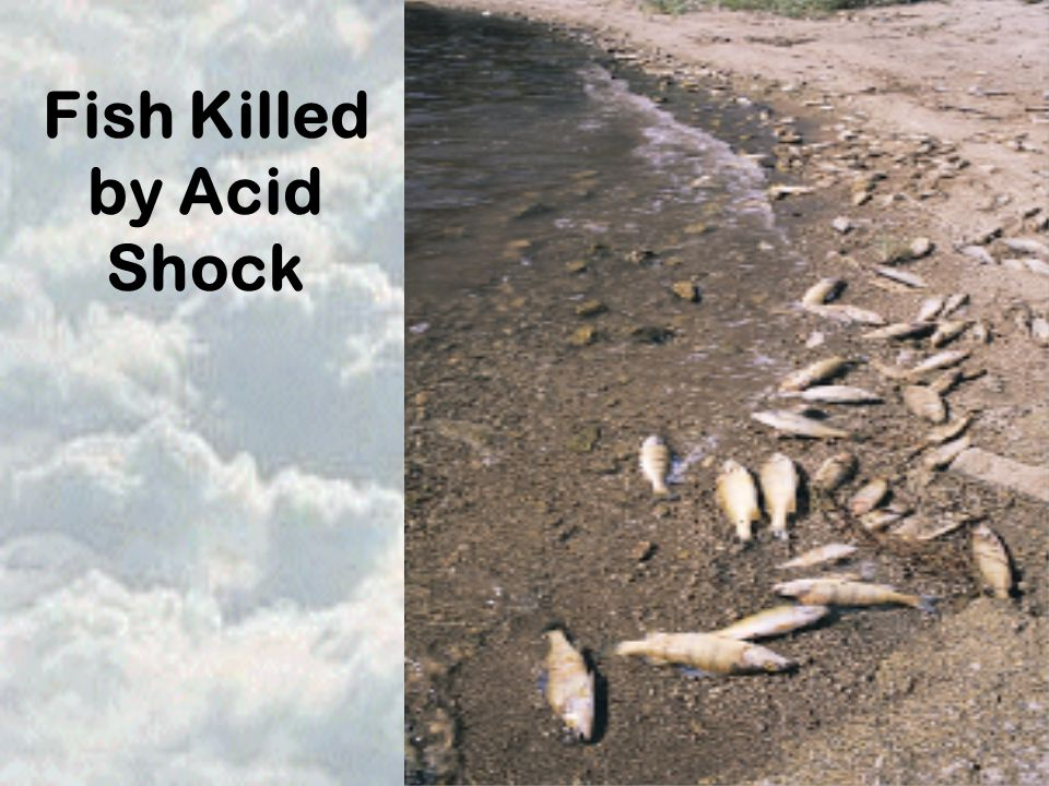 Fish Killed by Acid Shock
