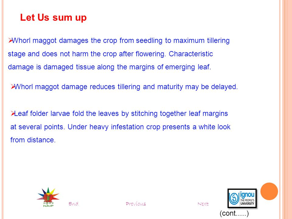 Let Us sum up Whorl maggot damages the crop from seedling to maximum tillering. stage and does not harm the crop after flowering. Characteristic.