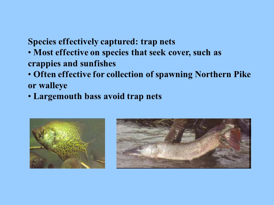 Species effectively captured: trap nets