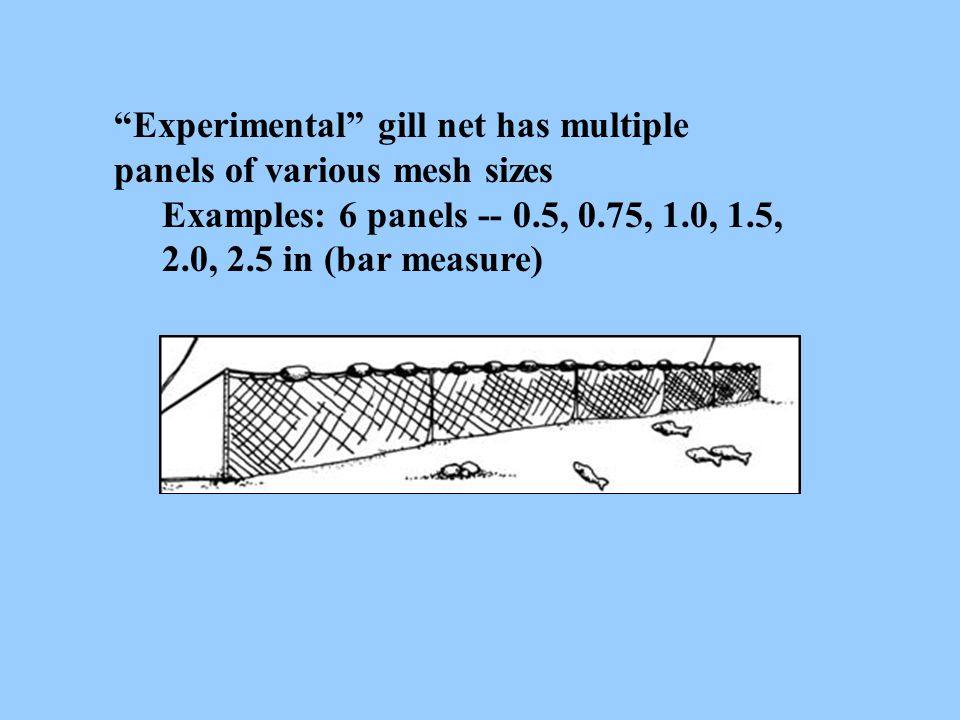 Experimental gill net has multiple