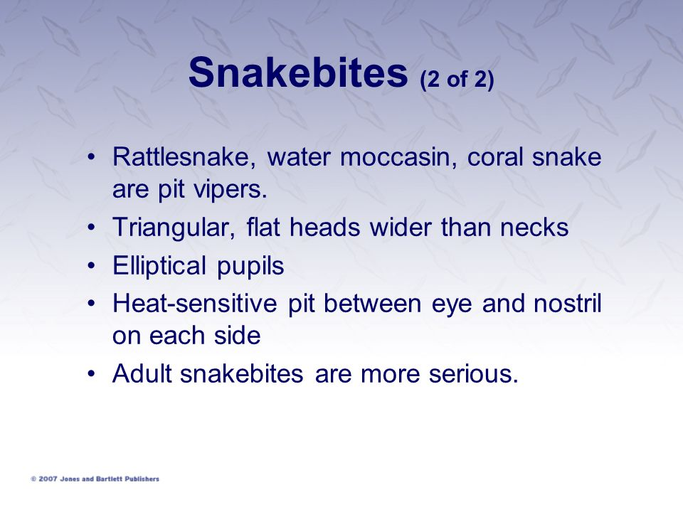 Snakebites (2 of 2) Rattlesnake, water moccasin, coral snake are pit vipers. Triangular, flat heads wider than necks.