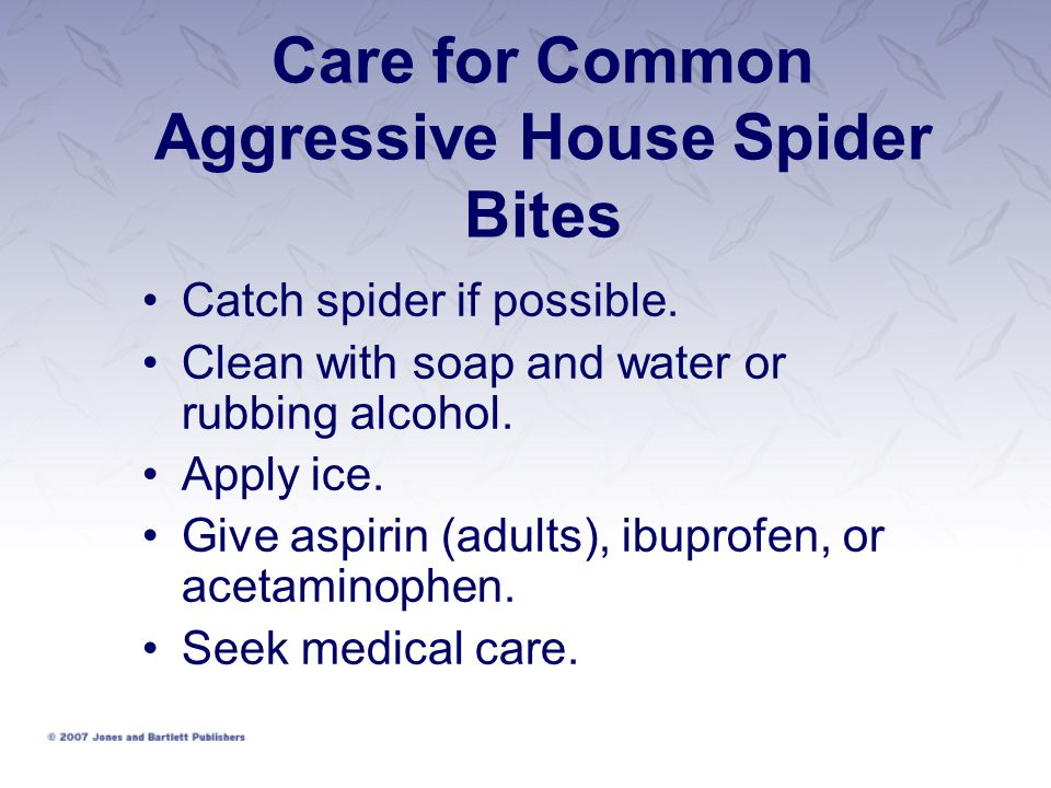 Care for Common Aggressive House Spider Bites
