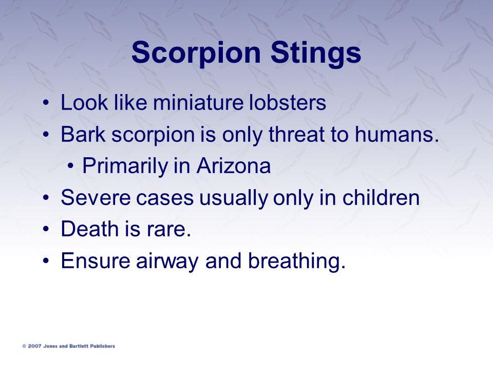 Scorpion Stings Look like miniature lobsters