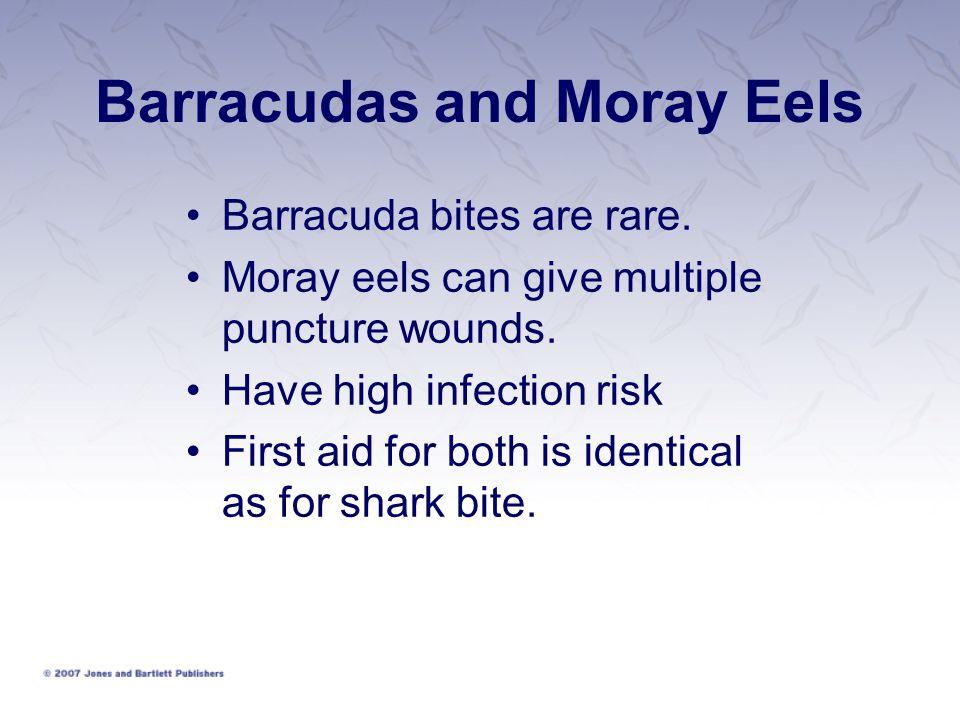 Barracudas and Moray Eels