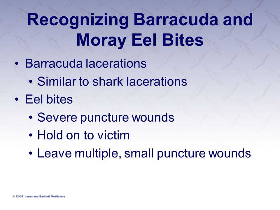 Recognizing Barracuda and Moray Eel Bites