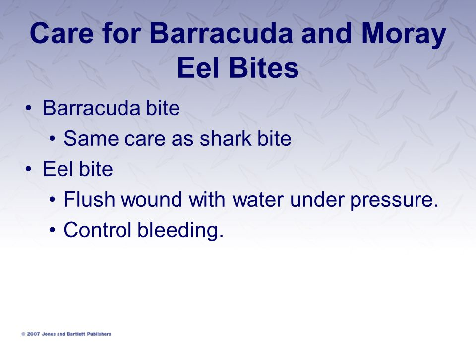 Care for Barracuda and Moray Eel Bites