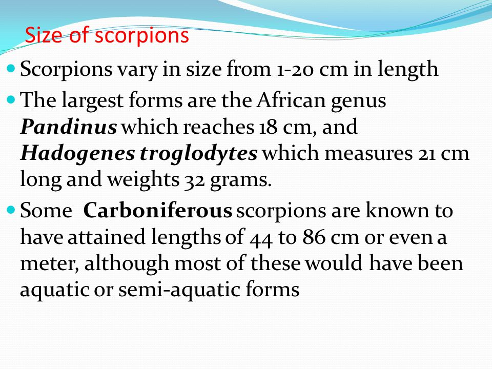 Size of scorpions Scorpions vary in size from 1-20 cm in length