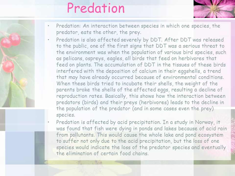 Predation Predation: An interaction between species in which one species, the predator, eats the other, the prey.
