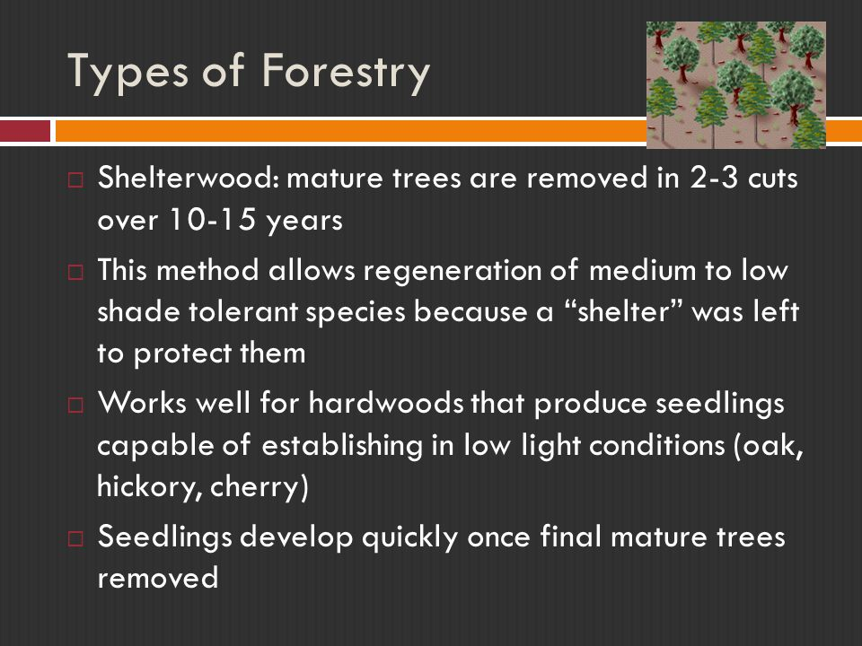 Types of Forestry Shelterwood: mature trees are removed in 2-3 cuts over 10-15 years.