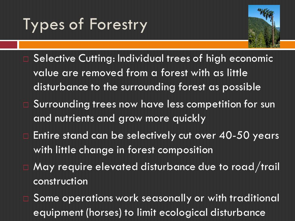 Types of Forestry