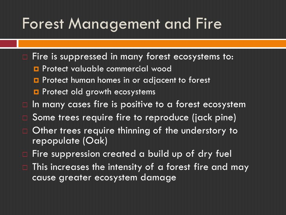 Forest Management and Fire