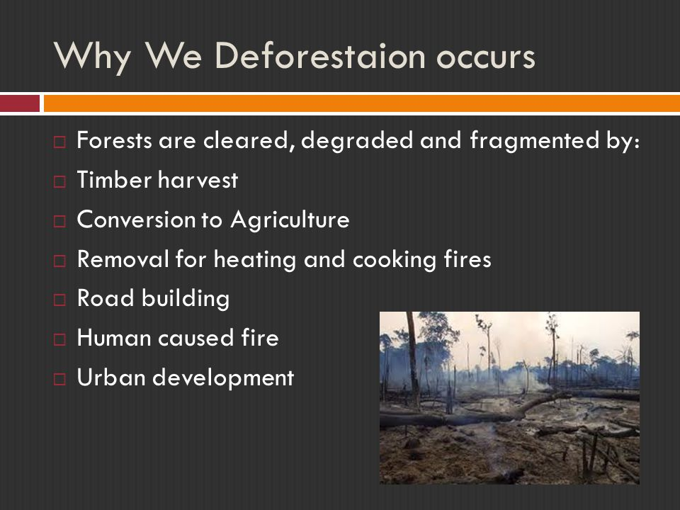 Why We Deforestaion occurs