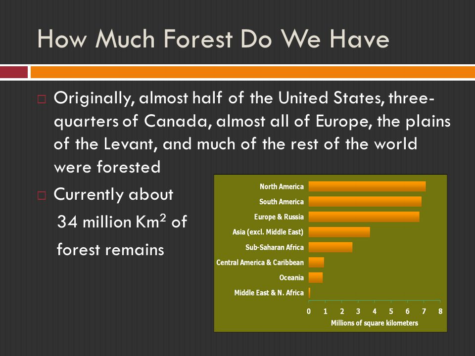 How Much Forest Do We Have