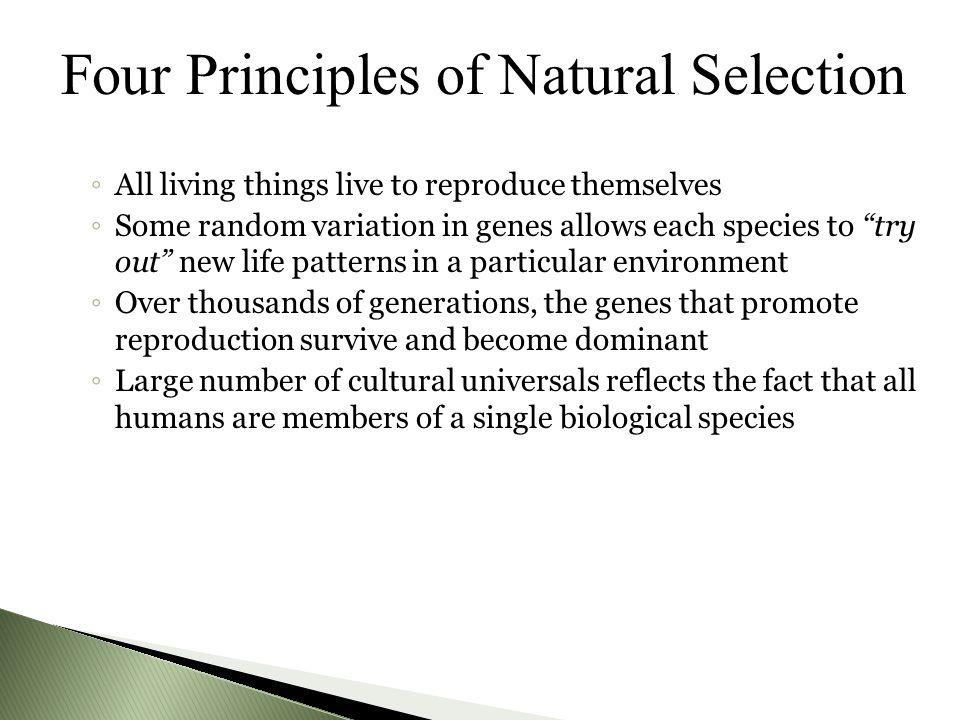 Four Principles of Natural Selection