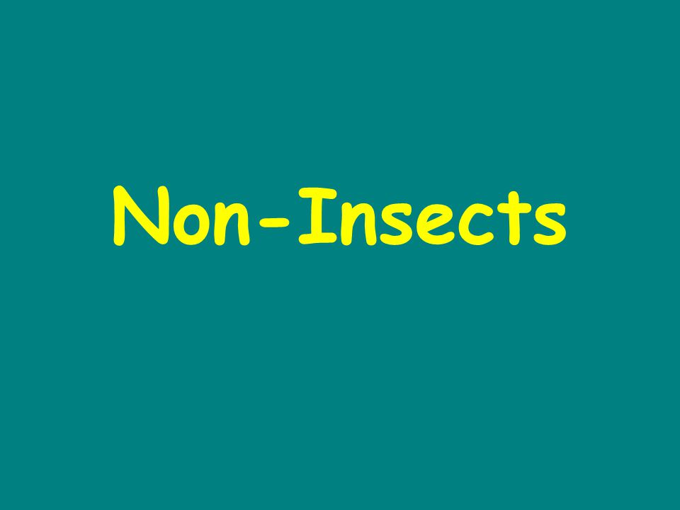 Non-Insects