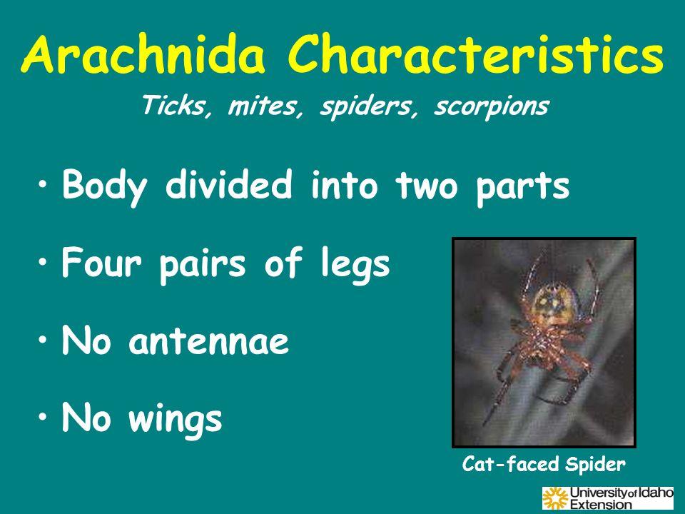 Arachnida Characteristics