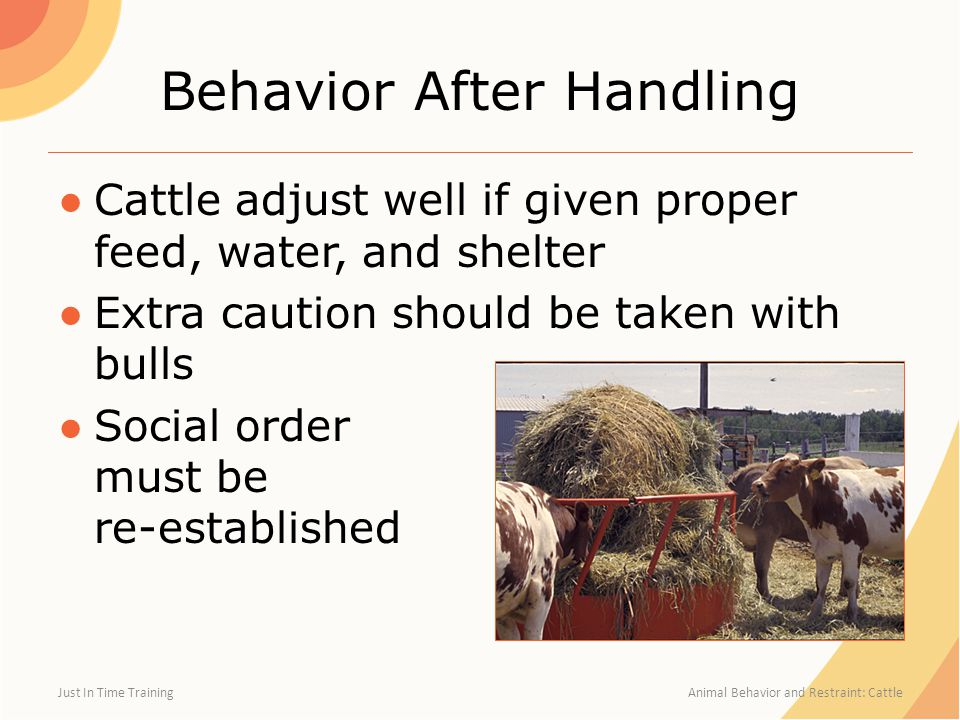 Behavior After Handling