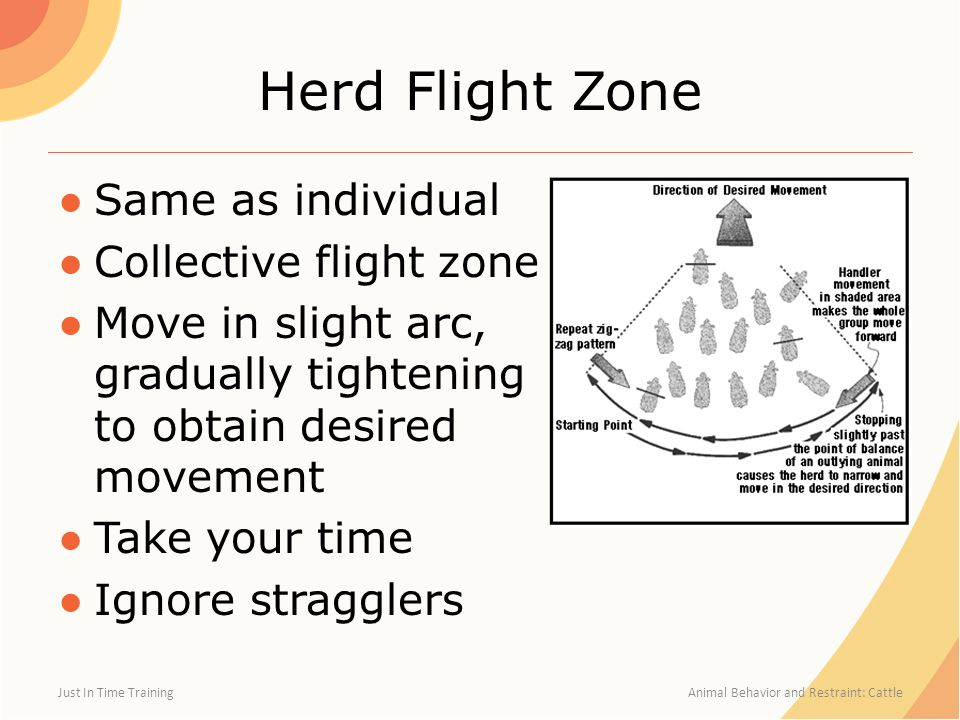 Herd Flight Zone Same as individual Collective flight zone