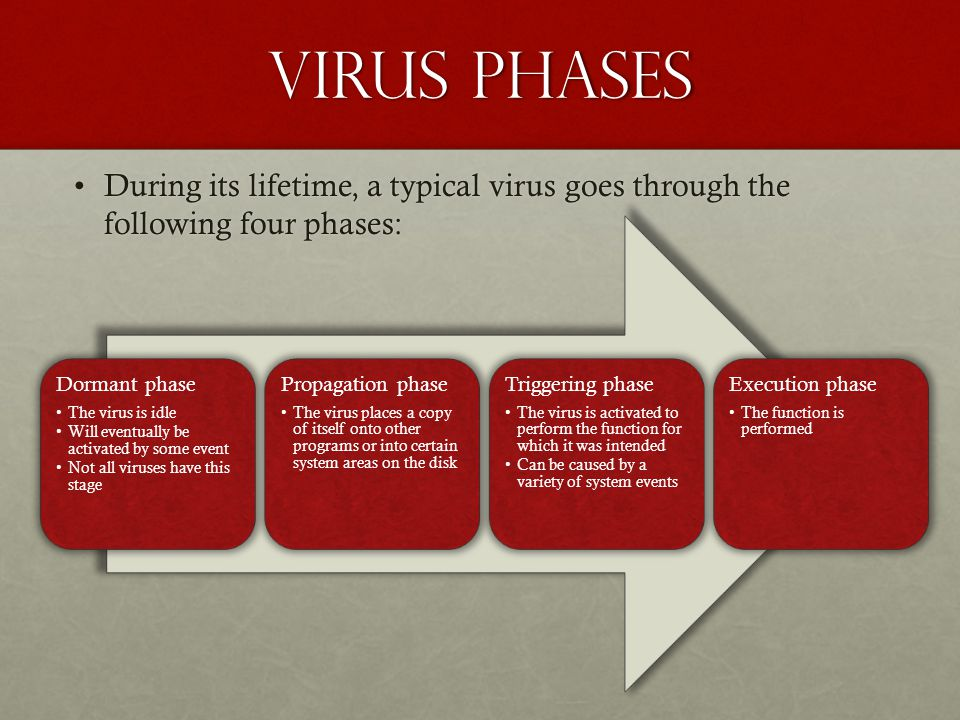 Virus phases During its lifetime, a typical virus goes through the following four phases: Dormant phase.