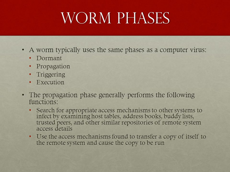 Worm phases A worm typically uses the same phases as a computer virus: