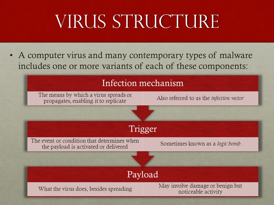 Virus Structure A computer virus and many contemporary types of malware includes one or more variants of each of these components: