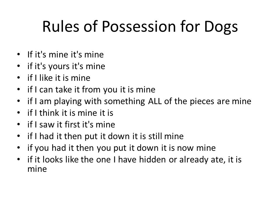 Rules of Possession for Dogs