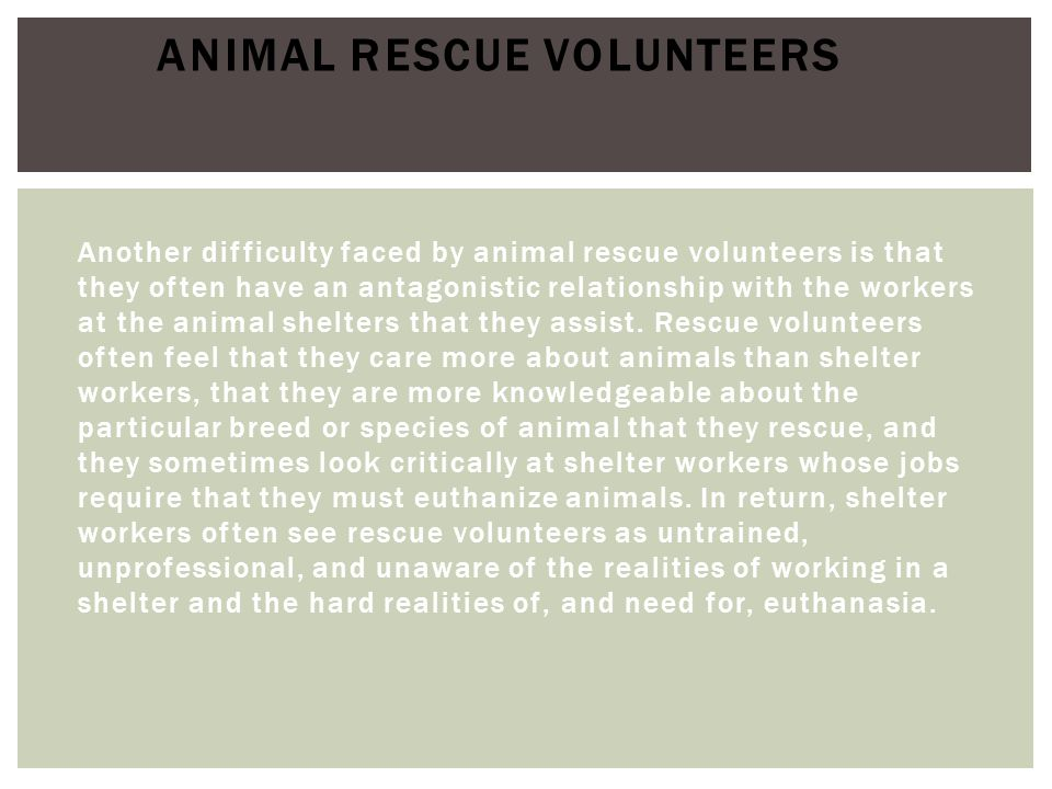 Animal Rescue Volunteers