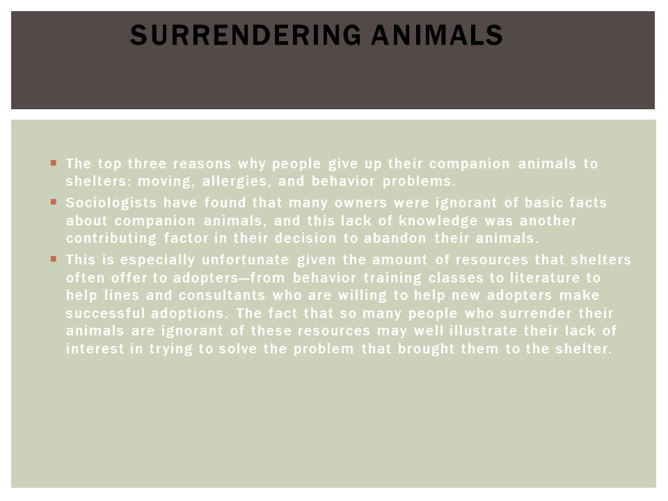 Surrendering Animals The top three reasons why people give up their companion animals to shelters: moving, allergies, and behavior problems.