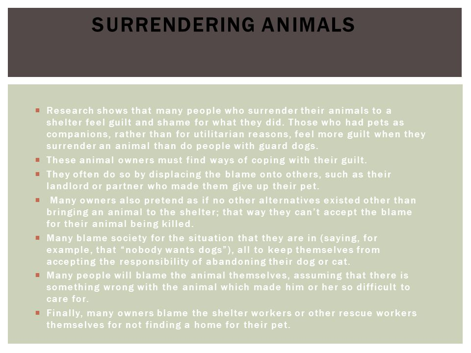 Surrendering Animals