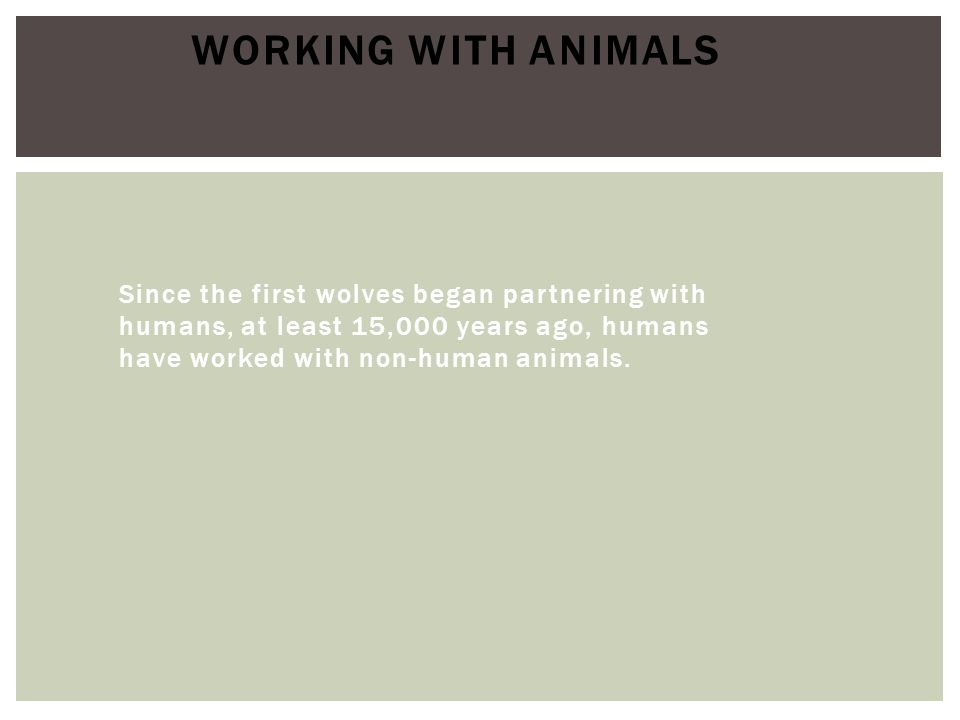 Working with Animals Since the first wolves began partnering with humans, at least 15,000 years ago, humans have worked with non-human animals.