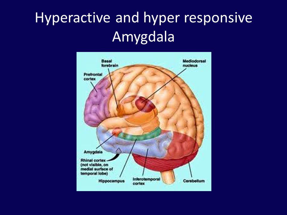 Hyperactive and hyper responsive Amygdala