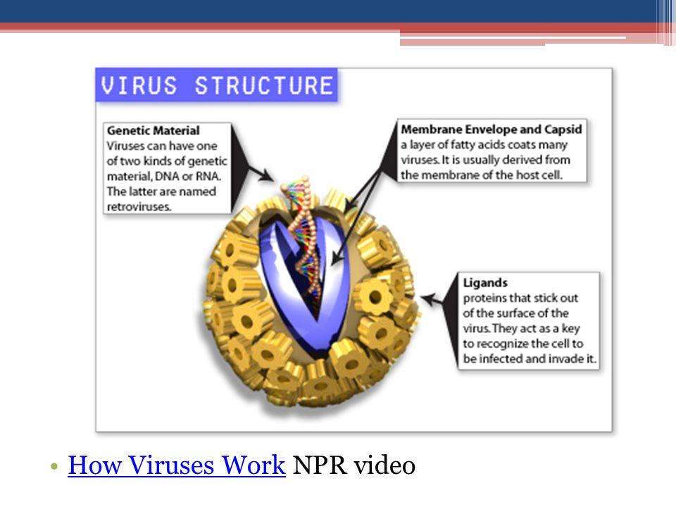 How Viruses Work NPR video