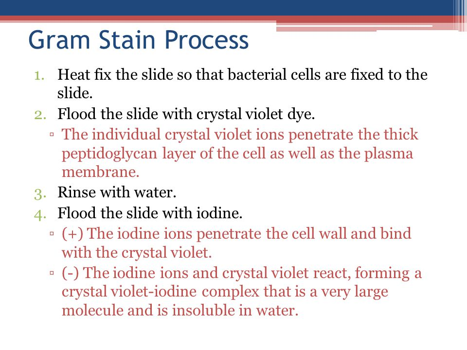 Presentation Name Course Name. Unit # – Lesson #.# – Lesson Name. Gram Stain Process.