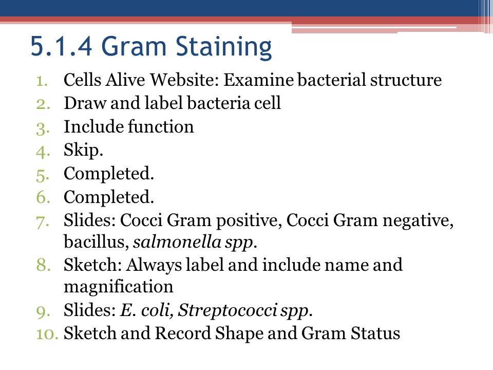 5.1.4 Gram Staining Cells Alive Website: Examine bacterial structure