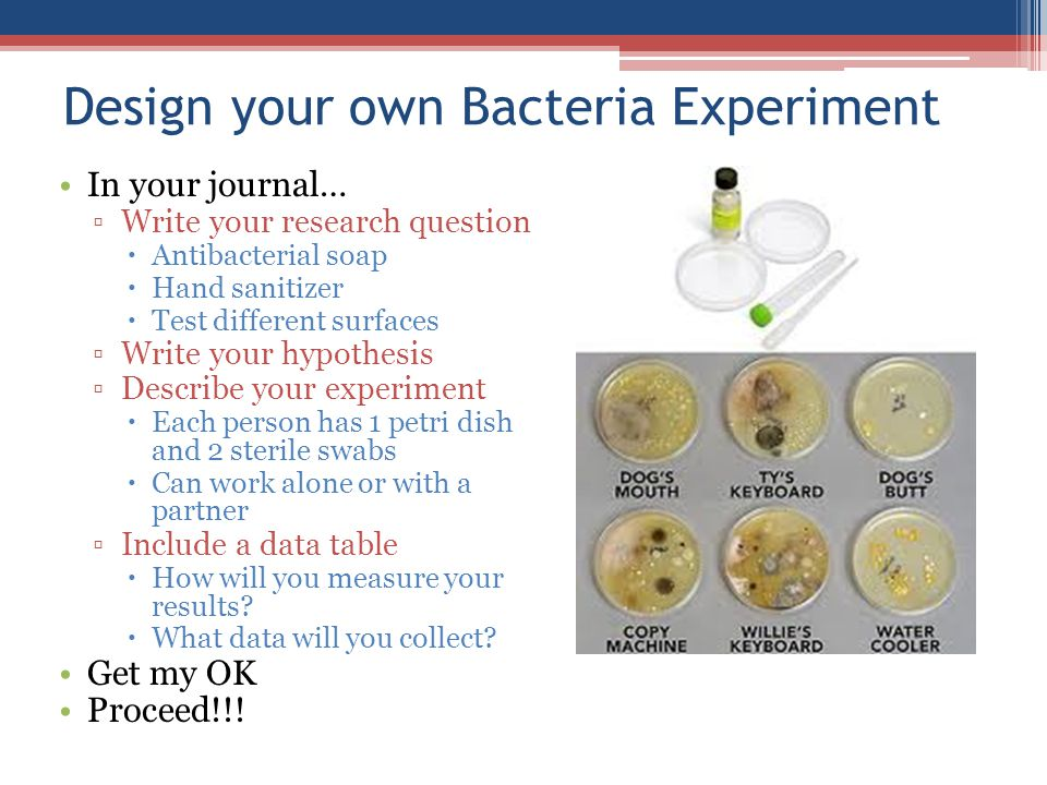 Design your own Bacteria Experiment