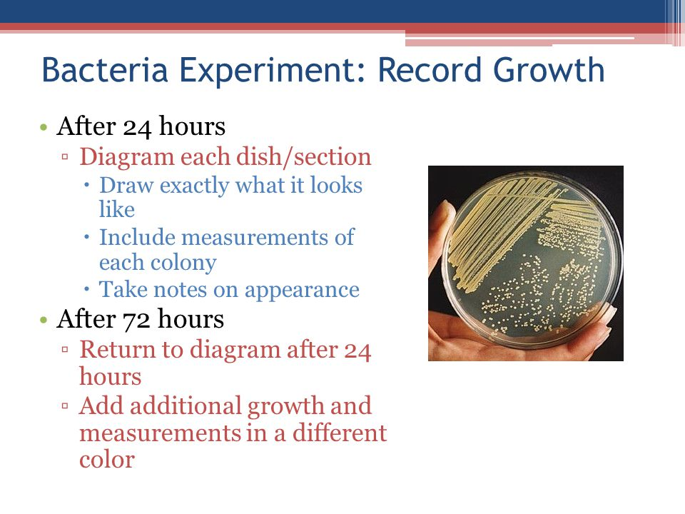 Bacteria Experiment: Record Growth