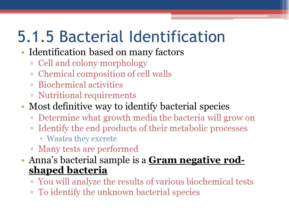 5.1.5 Bacterial Identification
