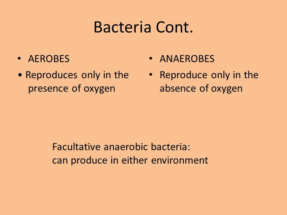 Bacteria Cont. AEROBES • Reproduces only in the presence of oxygen