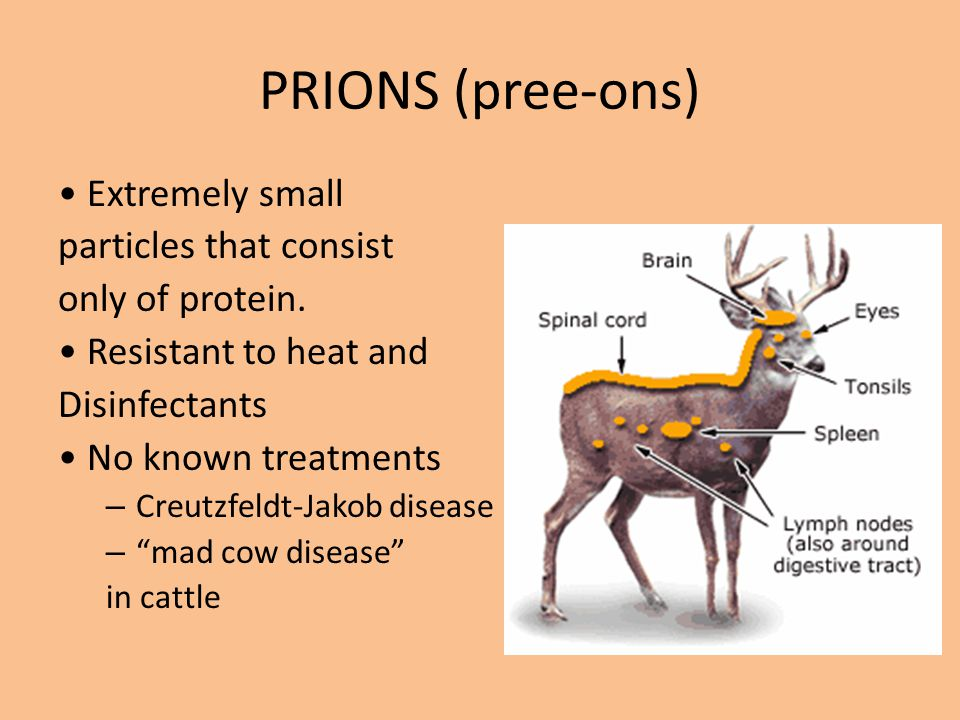 PRIONS (pree-ons) • Extremely small particles that consist