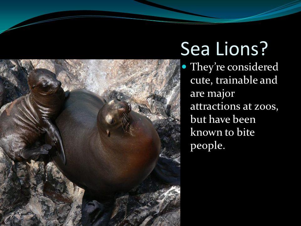 Sea Lions.